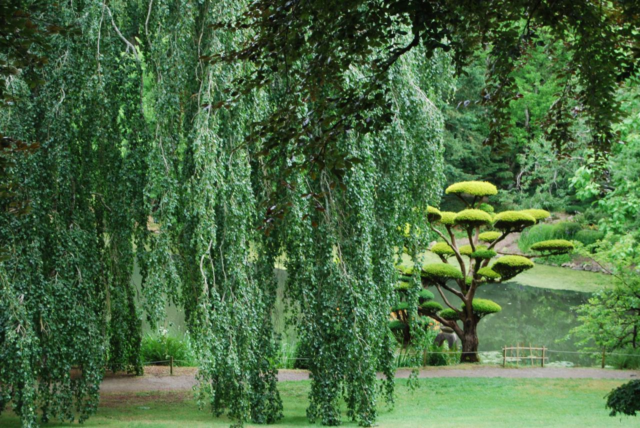 1 Parc oriental de Maulévrier (8)