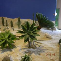 Les plantes exotiques