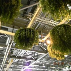 Les plantes suspendues