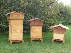 abeille-ruche.jpg