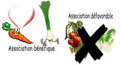 asso-legumes.jpg